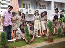 sapling-plantation