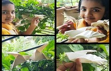 Making Origami Dove - International Peace Day Celebration